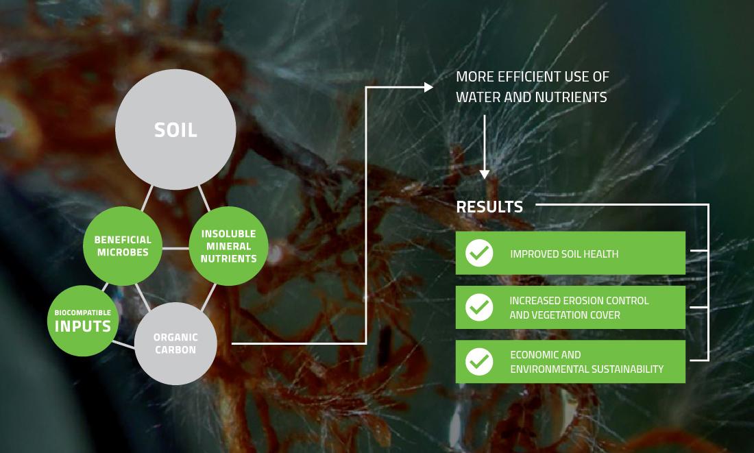 BioGrowth-Diagram